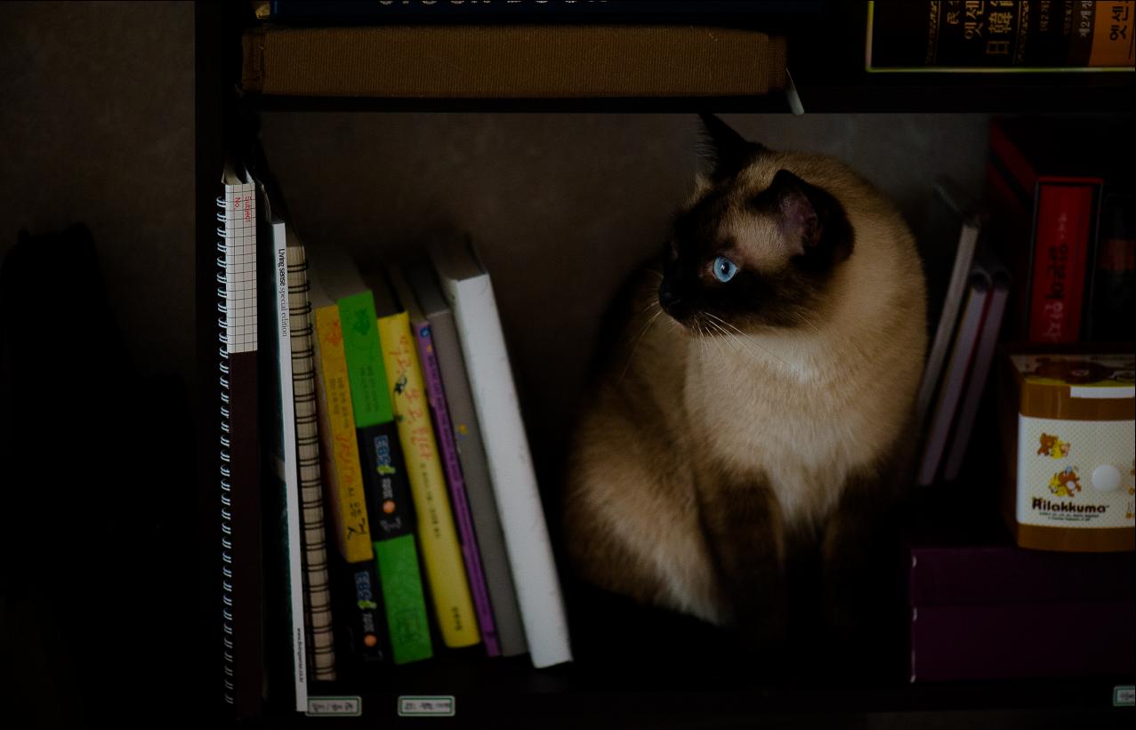 고양이가 있는 책장