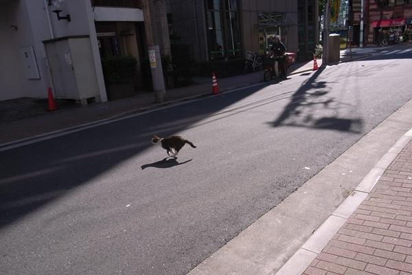 일본출장기록 - 도쿄(20081101~02_part1)