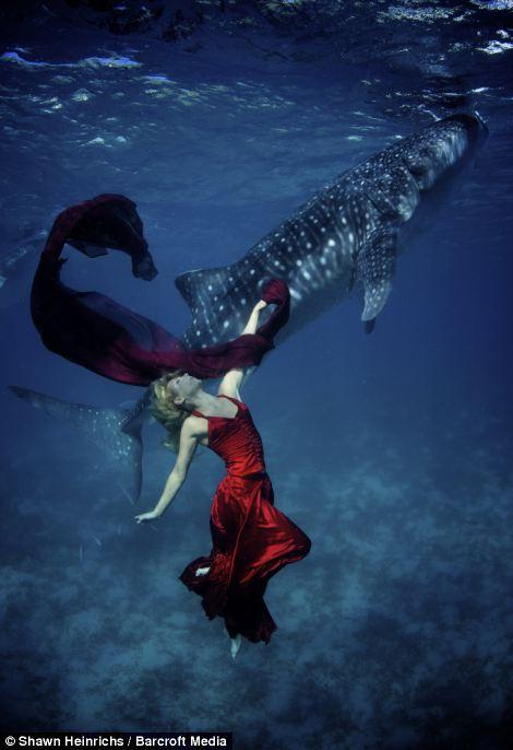 고래상어와 춤을...