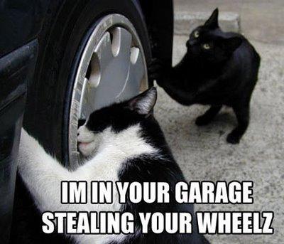 도둑고양이와 길고양이.