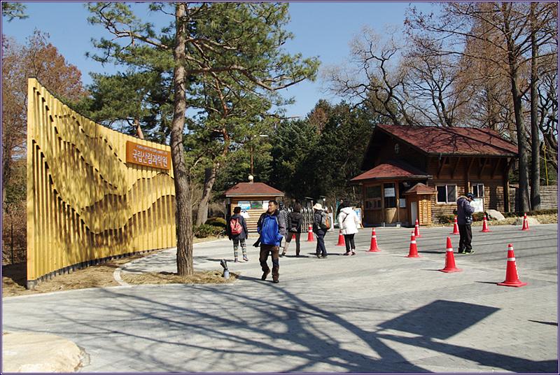 13_0303 홍릉 수목원 복수초 만나고 복원된 숭례문 보..