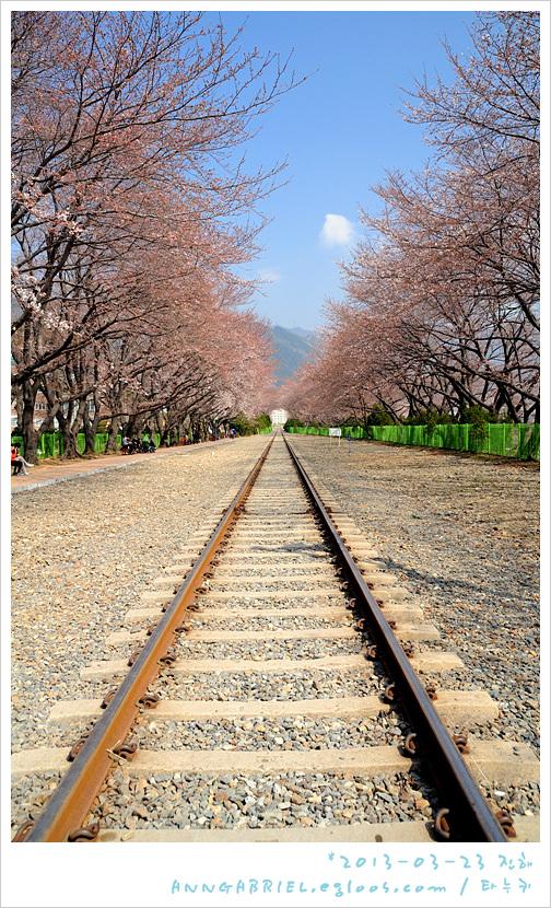 [진해] 경화역 이른 벚꽃 나들이