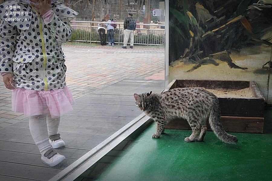 고양이와 닮은 듯 다른 '삵'의 매력