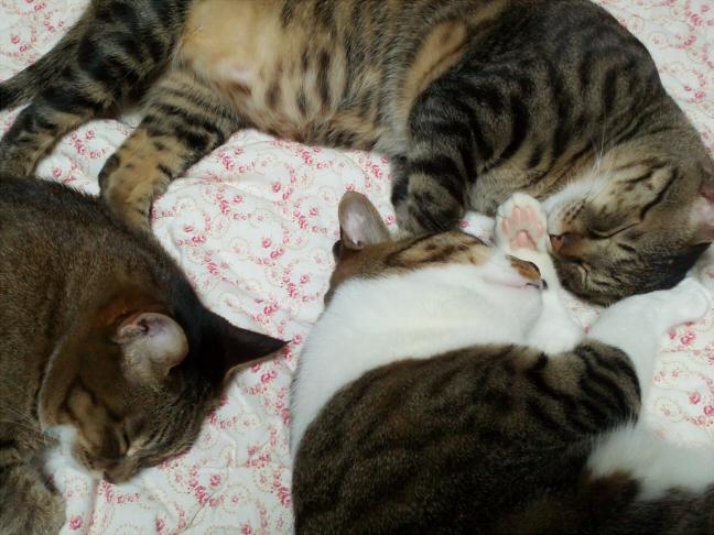 [내고양이]어쩌다 사이좋은 낮잠