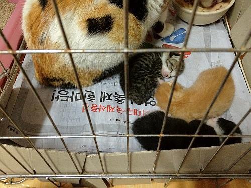 아기고양이 모두 구조 완료... -_-;;;