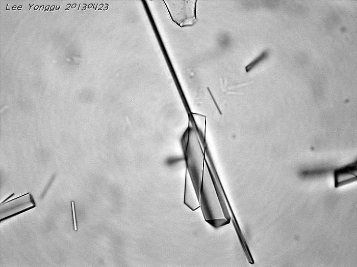 화학 조미료 결정 현미경 사진