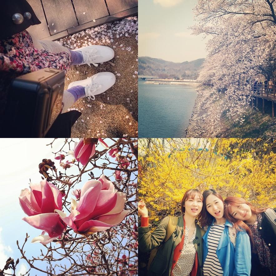 안동 봄꽃