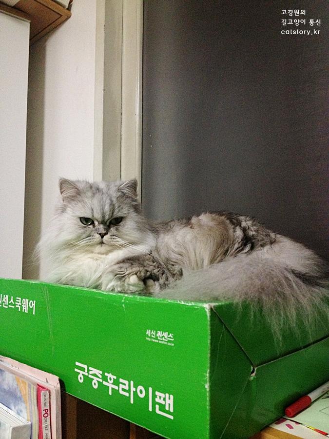 스밀라가 보내는 '고양이 키스'