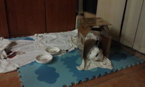 갱신 토끼