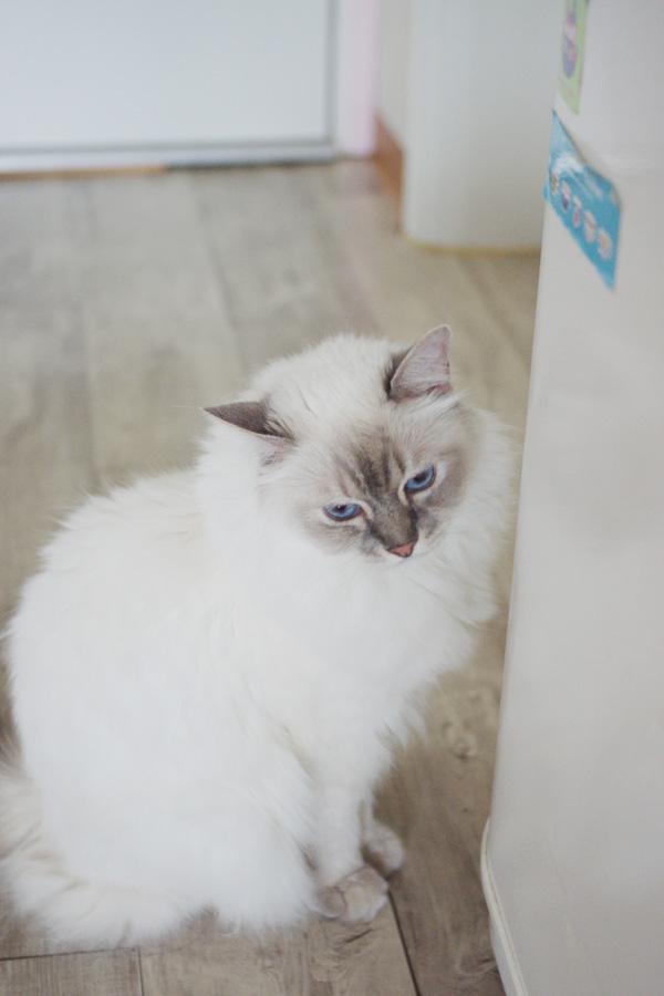 파란눈 소호