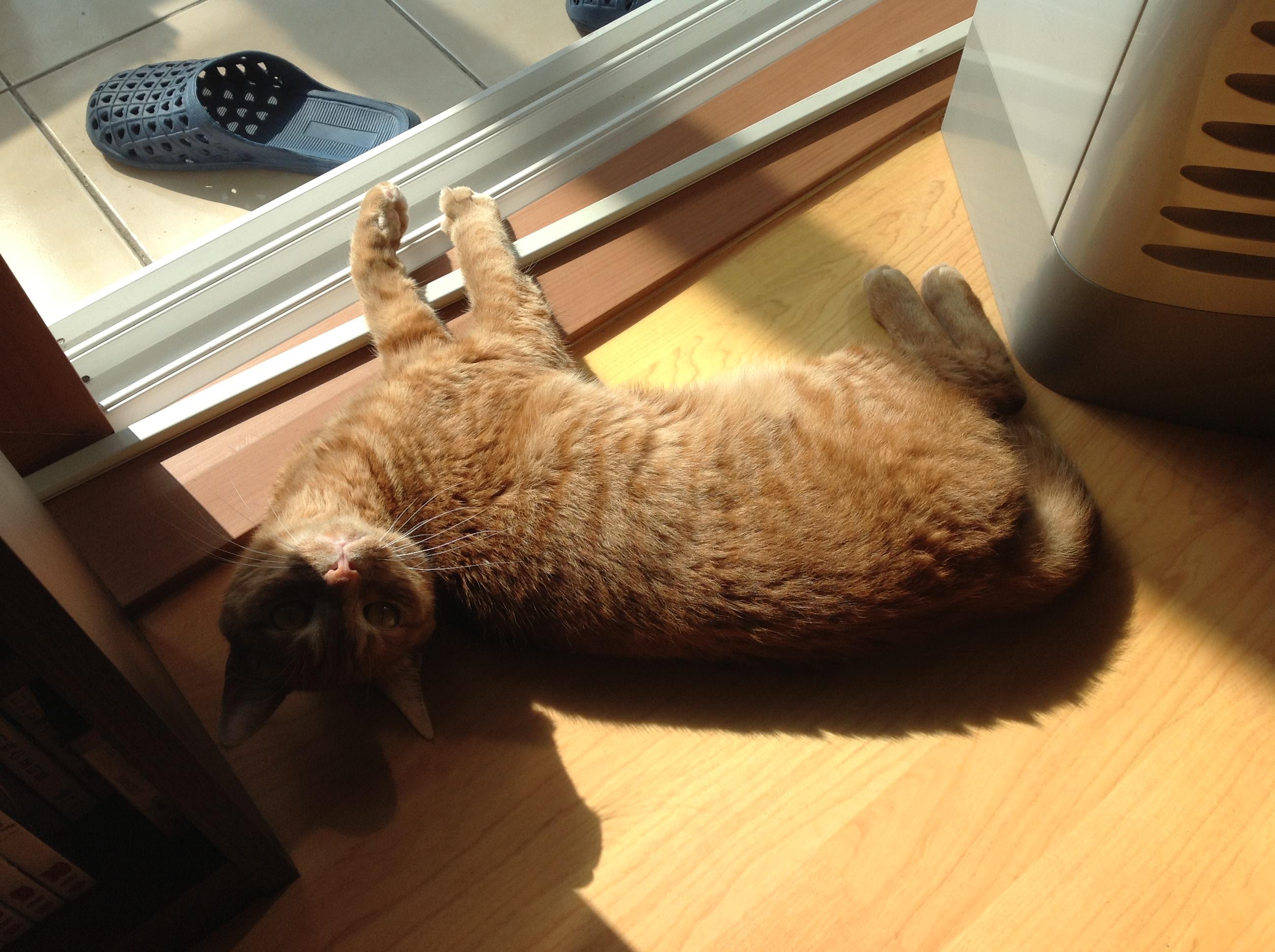 청년 고양이 두찌의 여름 망중한