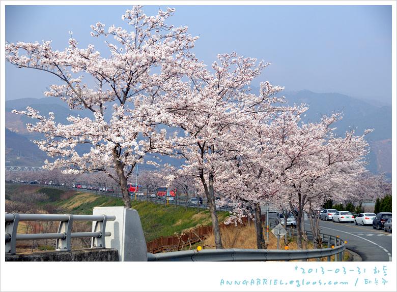 [하동] 벚꽃만발 19번 섬진강대로