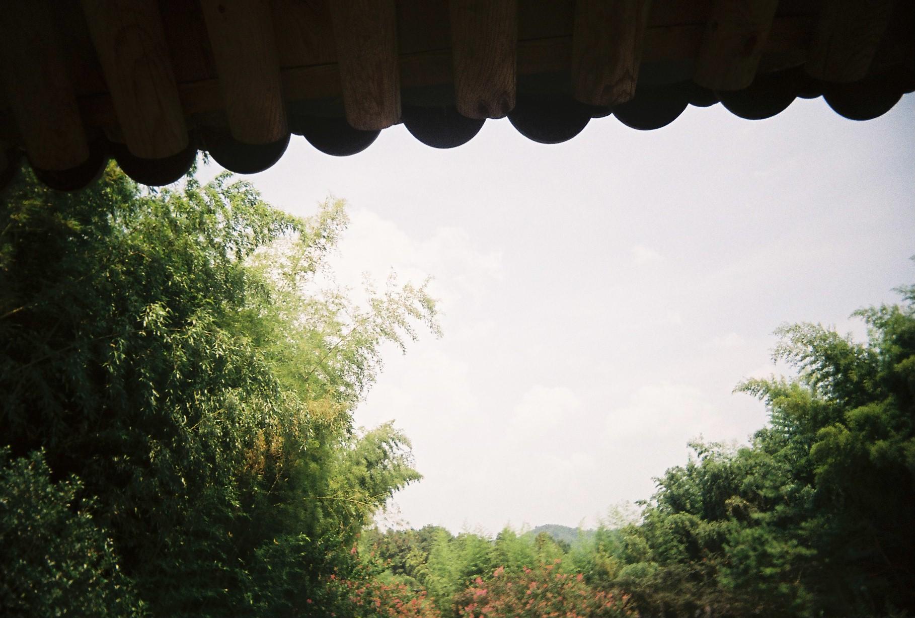 엑시무스로 찍은 여름의 기억-2