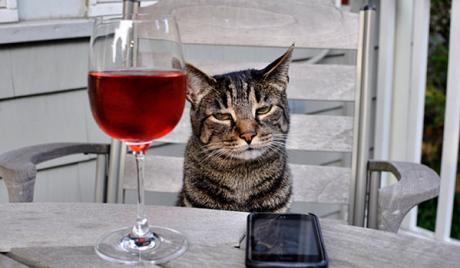 일본에서 고양이 전용 와인 「냥냥 누보」 발매