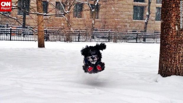 【NY대설】 개「눈이다! 눈이다! 야 이거! 눈! 눈..