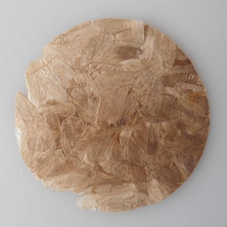Coleoptera plastic