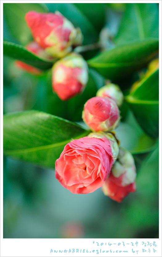 [집정원] 피어나는 봄