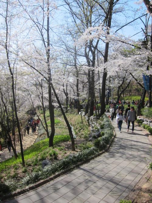 벚꽃터널을 걸어요. 둘이 손잡고~