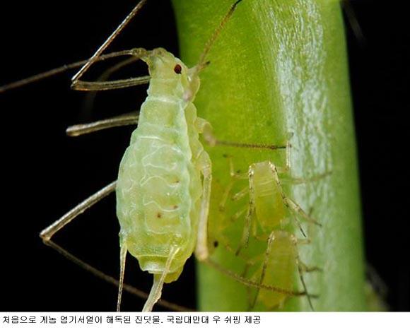 질소과잉 농작물에 진딧물이 번성하는 까닭은?