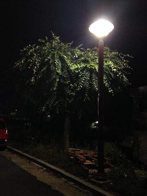 나무와 가로등