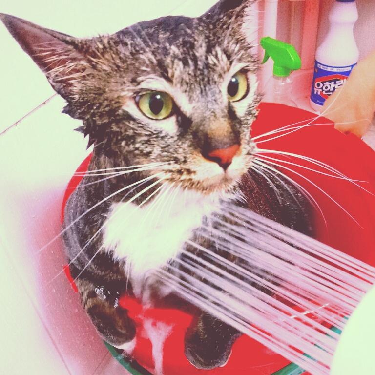 고양이 목욕이 전쟁이라던데