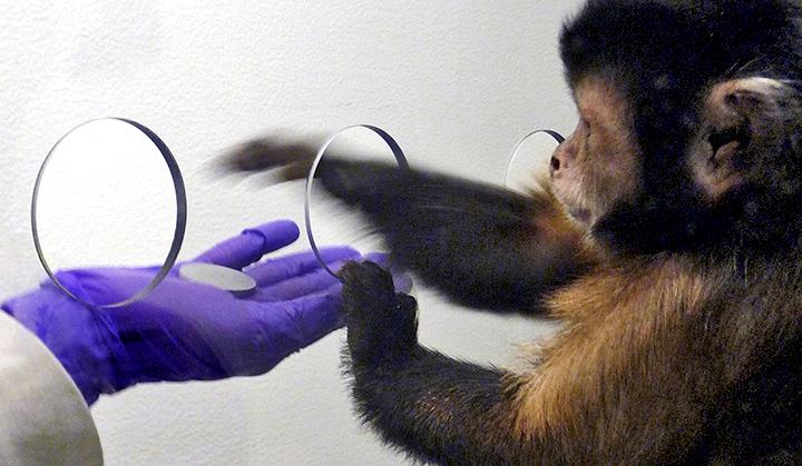원숭이는 가격에 현혹되지 않는다 [Science Dai..