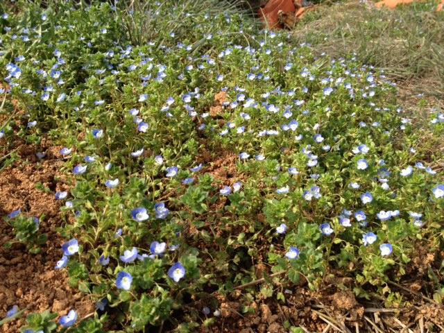 4월 2일, 시골의 봄, 아리아드나 y 페르난도, ..