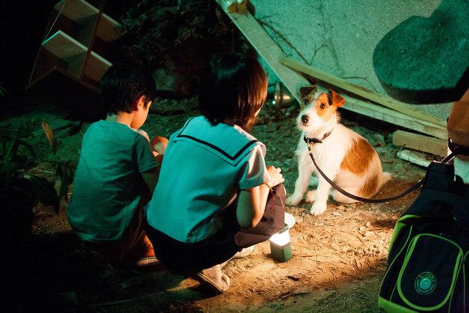 영화 '개를 훔치는 완벽한 방법' - 어른들을 위한 동화