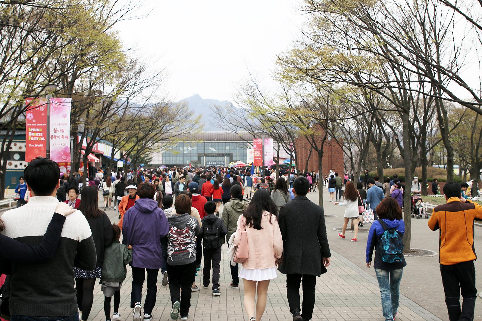 서울대공원 벚꽃 길