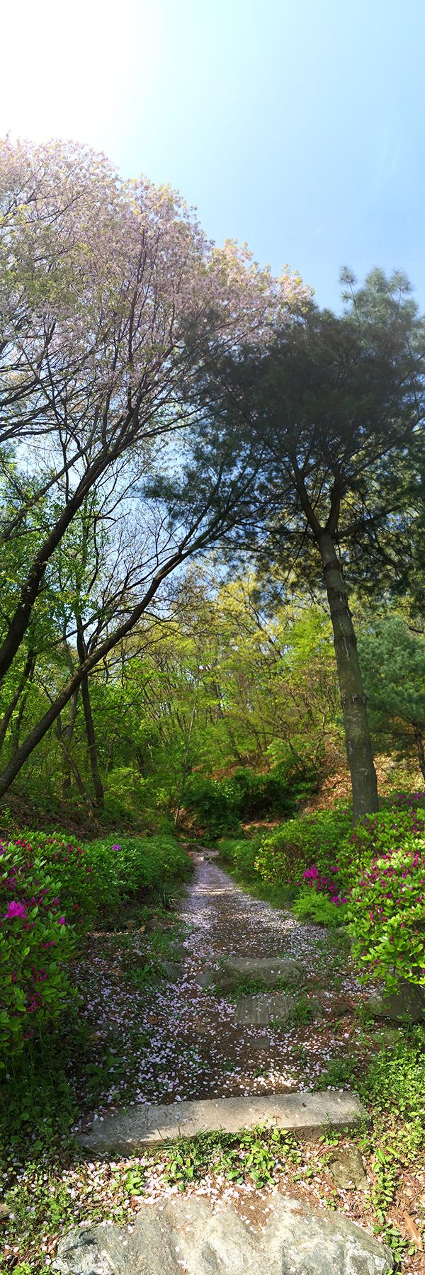 봄의 숲길