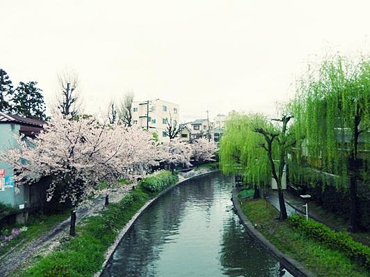 2015 벚꽃과 쇼핑과 덕질의 간사이(19) 봄날의 교토..