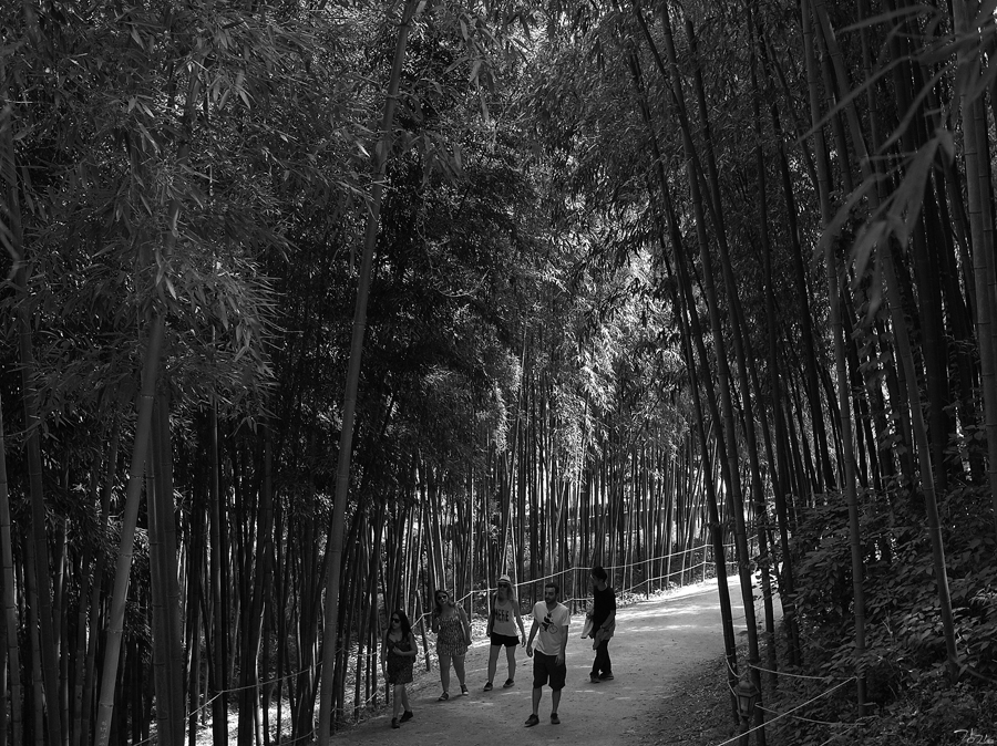 Strangers in the Wood