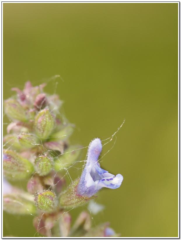 독사 머리를 닮은 꽃