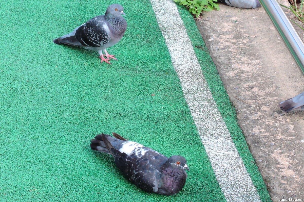 비둘기 사진 모음집