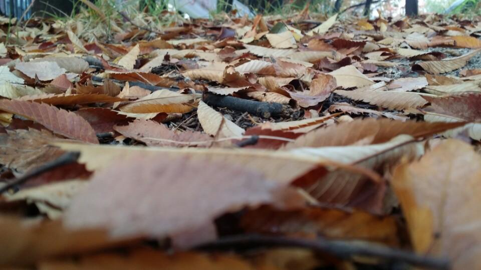 11월의 착각.