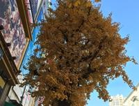 일본 동경은 1월 가을 날씨가 한창입니다…?