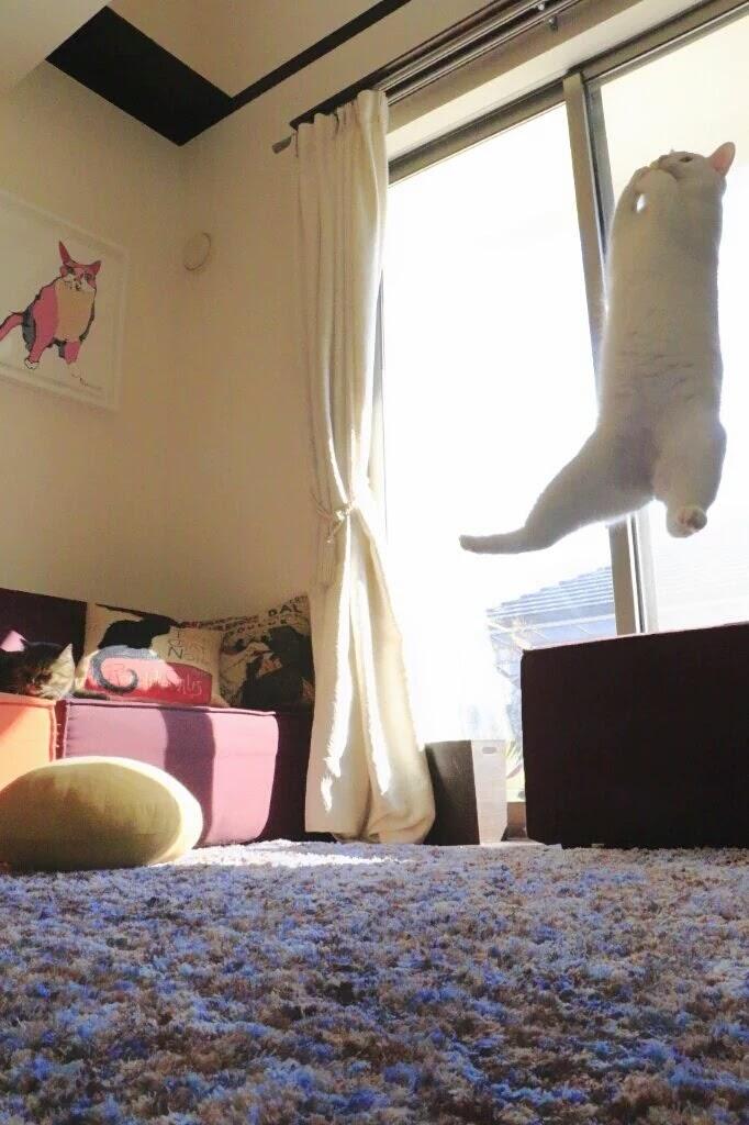 침대 스프링을 즐기는 고양이