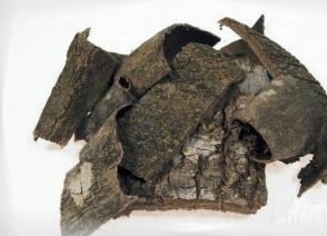 두충나무껍질 효능 및 복용법