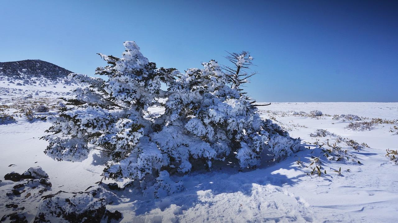 내 엽록소, 삼성 9, 바리스타, 겨울산