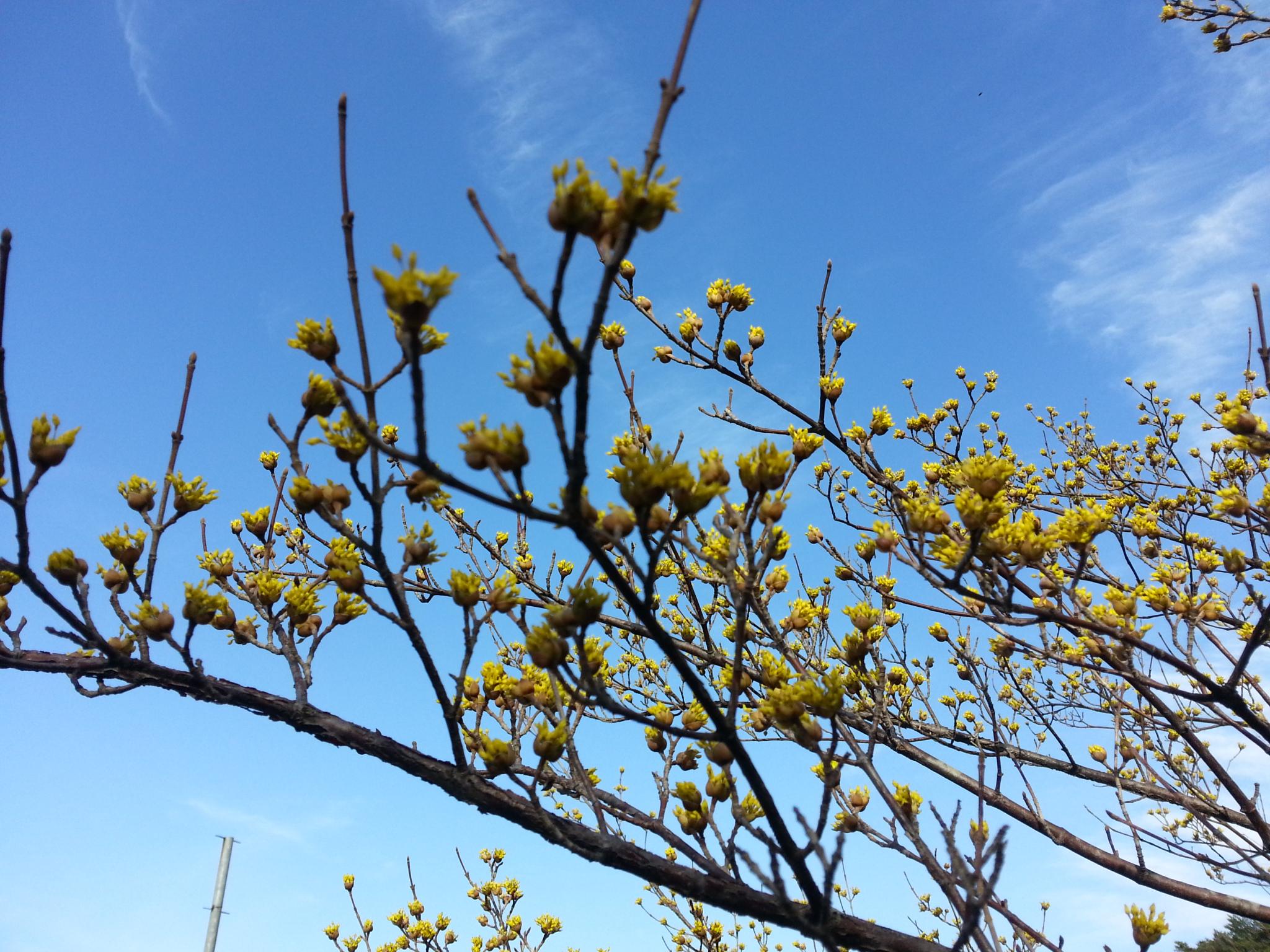 봄이다! &모닝회
