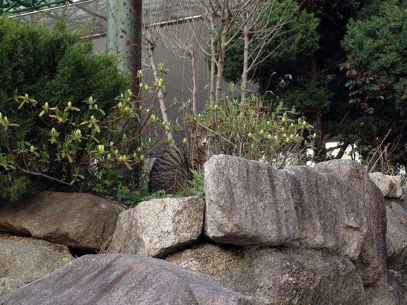 집 근처의 고등어태비 길냥이