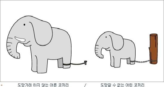 코끼리 사육과 학습된 무기력?