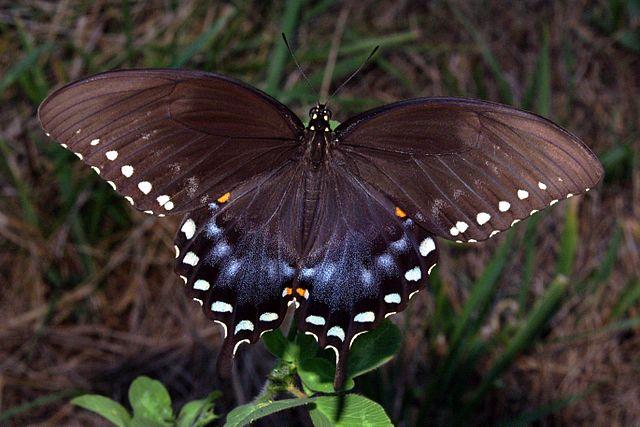 나비를 보았다.