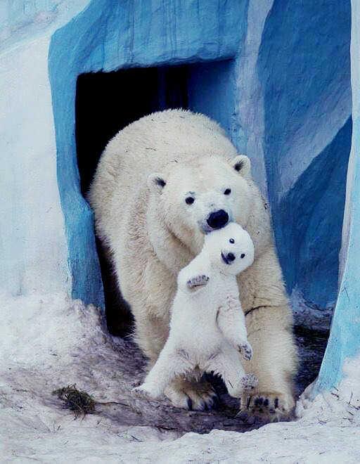 곰에 대한 이미지 검색결과
