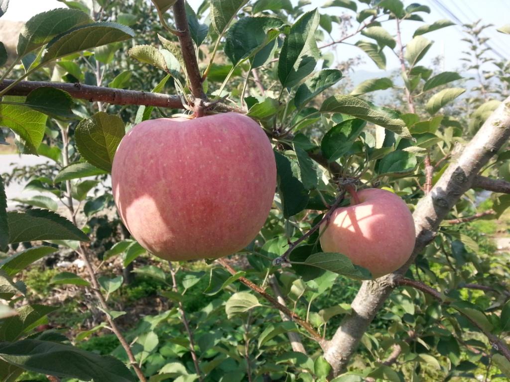 사과를 사러 가다.....^^