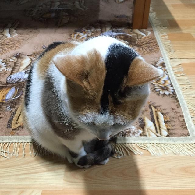 고양이도 인사하는 신년