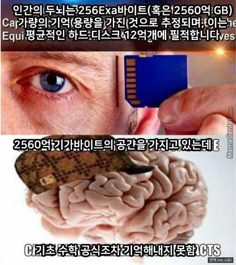 인간 두뇌 용량의 비밀