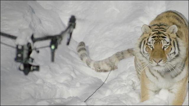 드론을 처음 본 고양이