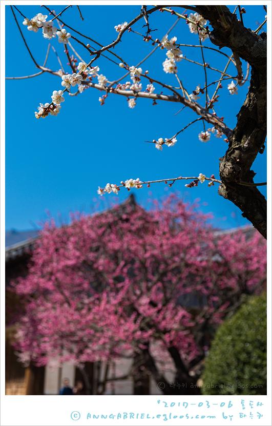 [통도사] 봄 경내 한바퀴