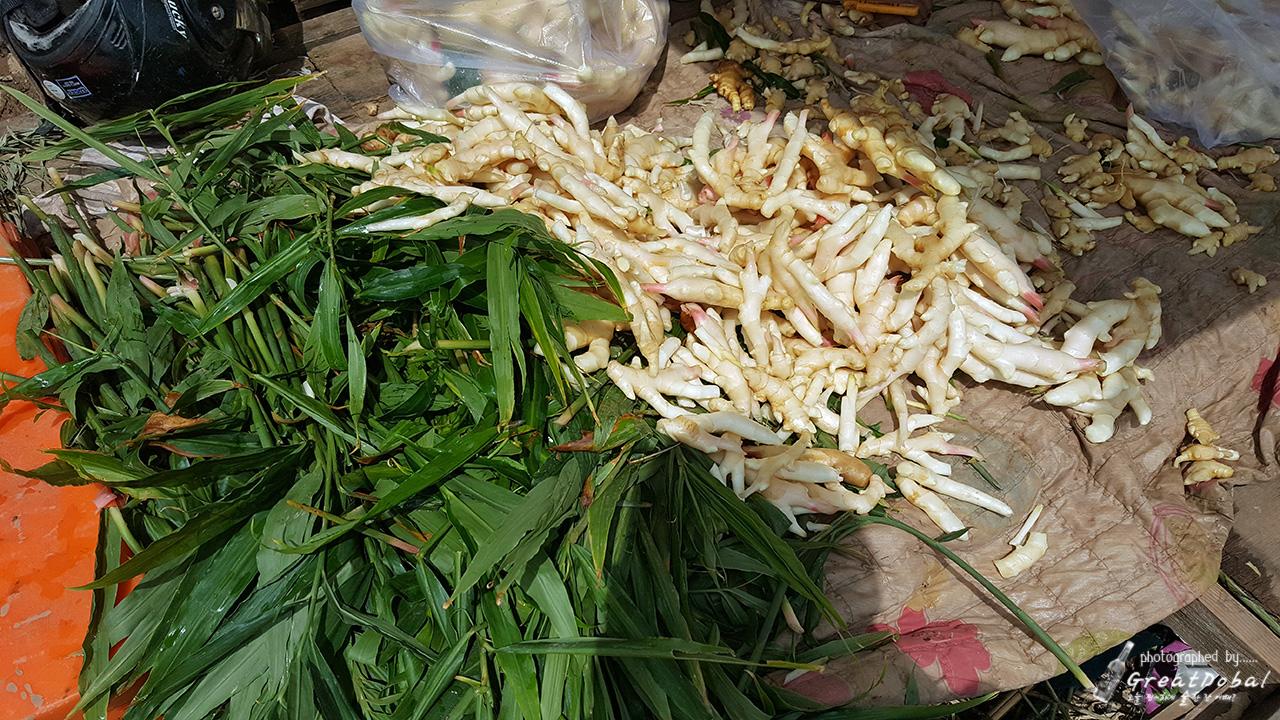 캄보디아 생강, 생강밭